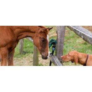 Pour les chevaux & chiens