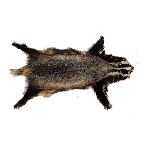 Badger 100cm