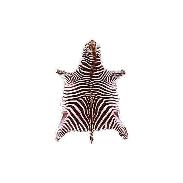 African Zebra skin rug
