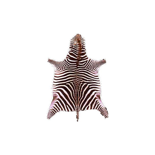 Zebra Teppich  Dekoration  Das LederHaus  Leder, Pelz