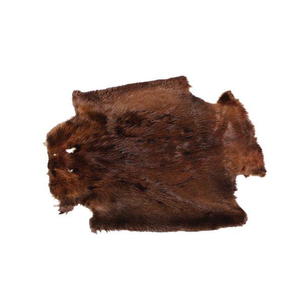 Beaver skin approx 75cm