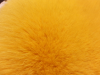 Blue Fox,Not available,Yellow