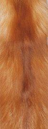Gold Fox,,Natural