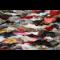 Fox plate approx 230x120cm