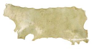 Rawhide (Parchment)