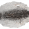 Ringsæl ca. 4-5 kvf C+ sortering fra Grønland