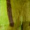 Springbukk skinn