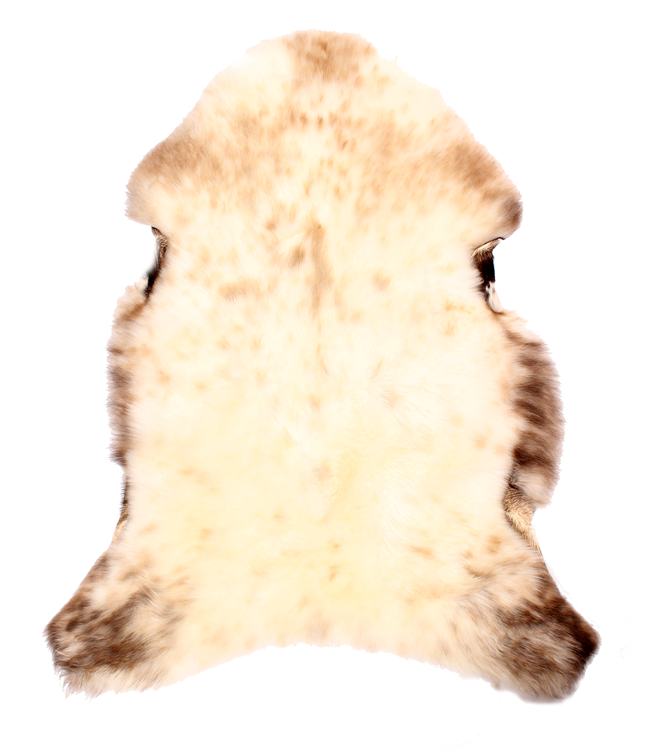 engelsk fåtölj skinn ~ engelsk lammeskinn  virksomheten presenterer  kontor